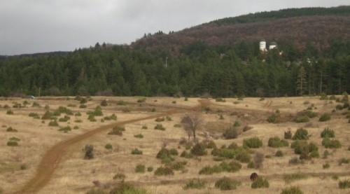Търсят се доброволци за залесяване около Кремиковския манастир