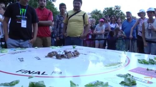 Охлюви в блгаготворителна надпревара в Стара Загора