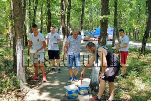 Доброволци варосаха дърветата пред Дома за хора със сетивни нарушения